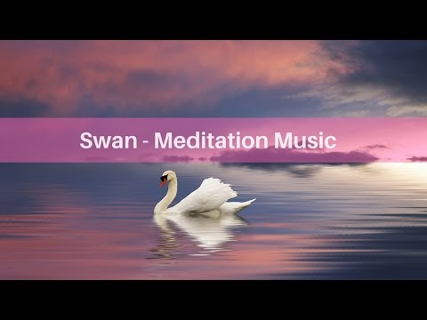 Meditation Music - Swanrelaxing music