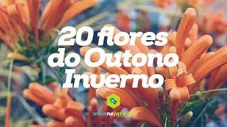 20 flores do Outono/Inverno