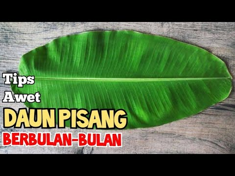 Nyonya Chicken Rendang( Rendang Ayam) from YouTube · Duration:  6 minutes 9 seconds