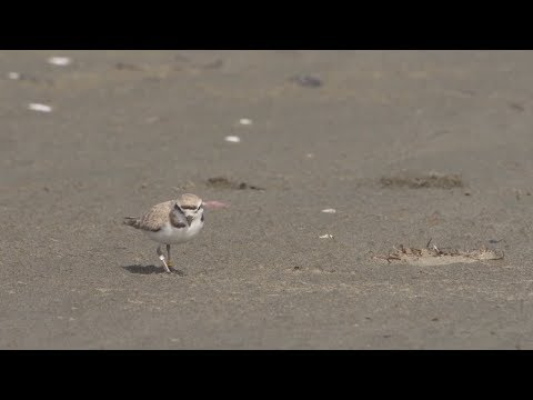 Caring for Your Coast: Beaches and Harbors Protects Wildlife While Keeping the Beaches Clean