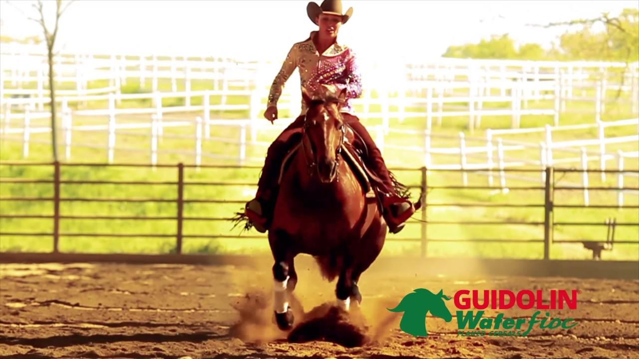 de3027b463 Guidolin Horses – Guidolin Horses offre unalimentazione completa a base di  foraggi a fibra lunga e cereali fioccati per il benessere del tuo cavallo.