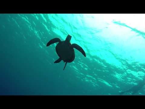 Mala Pier Dive - Lahaina - Maui
