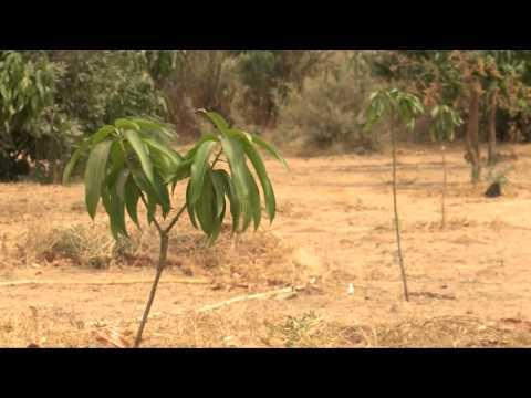 Rolling Back the Desert in Senegal