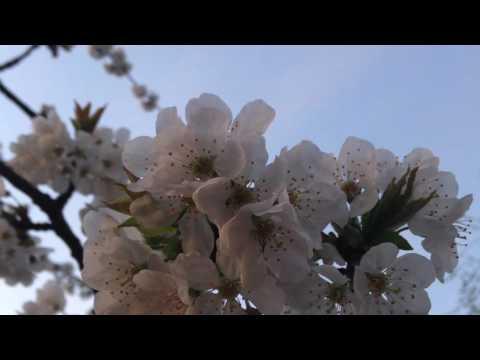 Finally Fell in Love - Nature, Poetry, Seasons, Rumi (Persian Song)