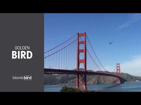 Even Other Birds Will Be Fooled By This Lightweight, Discreet & App-Controlled Drone