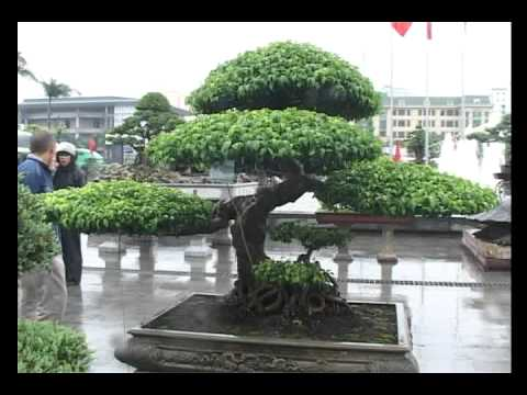 Vinabonsai-Triển lãm cây cảnh Thăng Long Hà Nội 8-10-2011_Phan 2