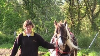 How To Grow Potatoes With Horses. Part Two: Earthing-Up, Spraying, Weeding And Watching.