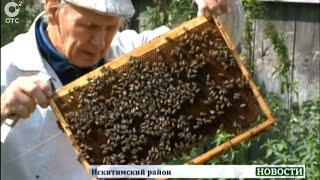 Пасечник Николай Овчинников из Искитимского района более 40 лет посвятил пчеловодству(, 2015-09-02T07:41:59.000Z)
