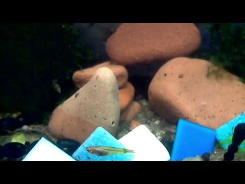 Live Stream Aquarium by Reef Pet - Relaxing Music