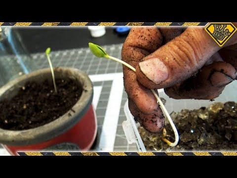 Turn Apple Seeds Into A Tree
