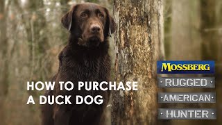 How To Purchase A Duck Dog. Training A Hunting Retriever For Being A Trained Waterfowl Dog