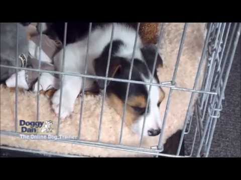 how-to-crate-train-a-puppy
