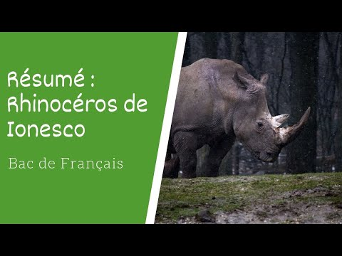 Resume De Rhinoceros De Ionesco Bac De Francais Youtube