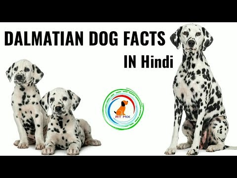 Dalmatian Dog Facts | Important Dalmatian dog facts in Hindi | in Hindi | Dalmatian Dog Facts