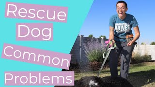 What to Know About Training a Rescue Dog (and Advice for 3 Common Problems) //THE KIND CANINE