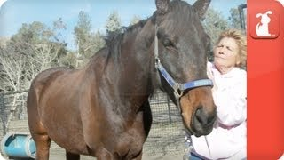 I love my Horse- My Forever Home