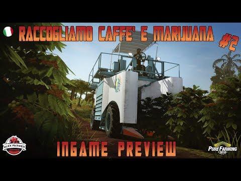 PURE FARMING 2018 PRE ALPHA - RACCOLTA CAFFE E MARIJUANA PRE ALPHA | ALEXFARMER GAMEPLAY ITA