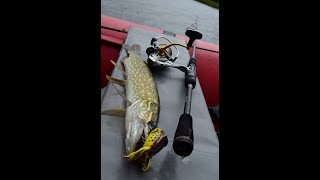 Рыбалка на реке Плюсса Окунь щука на воблеры лягушки и отводной спиннинг Щука лягушки воблер