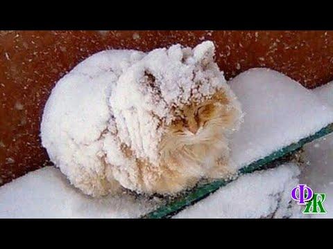 Связанный КОТ был почти занесён снегом. На веках застыли корочки льда, ему было даже больно моргать