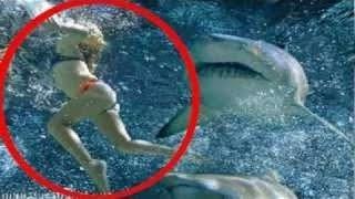 Shark Attack Megalodon  Amazing Video