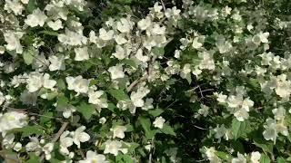 Nếu ai thích ngắm hoa thì cùng mình chiêm ngưỡng nhé#Khanhnguyen#CuocsongĐuc#