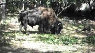 138 Parc animalier de Thoiry (78) Christine )