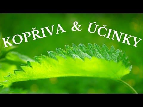 Kopřiva - léčebné účinky (kopřivový čaj a jeho účinky) - Zdraví z přírody