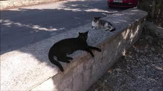 Котики, котики и ничего кроме котиков 😺😻🤗