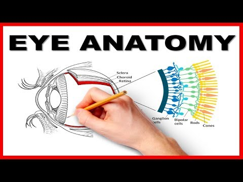 Eye Anatomy And Function - Made Easy