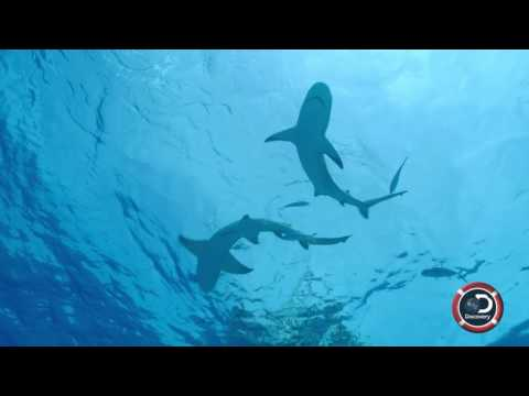 Land of Sharks – An Extraordinary Road Trip Through Time