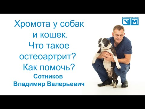 Хромота у собак и кошек