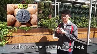 ccass的魚菜共生系統相片