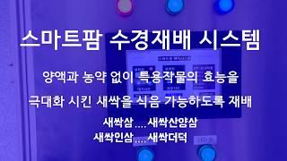 새싹삼 LED 수경재배 스마트팜 식물공장/새싹산양삼,새…