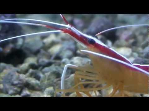 Marine Invertebrate
