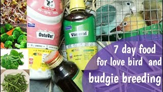 7 day food schedule for love bird and budgie breeding/love bird weekly breeding food