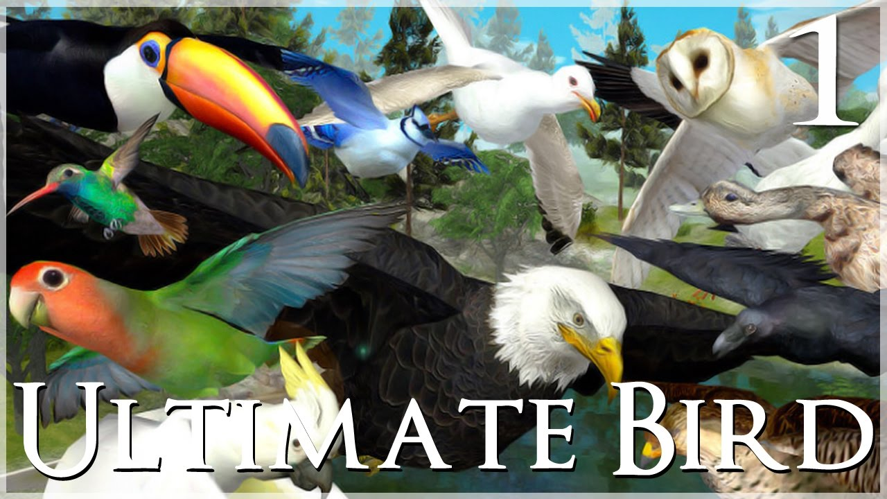 Time to Fly!! 🐦 Ultimate Bird Simulator - Episode #1