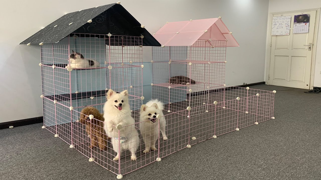 DIY Garden House for Pomeranian dog & Cute Cat with Magic Metal Mesh | Cutest Puppy | Mr Pet