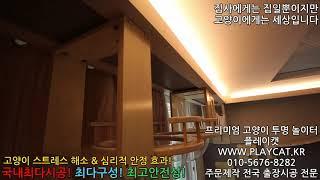 서울 빌라 거실  플레이캣 프리미엄 고양이 투명 놀이터…