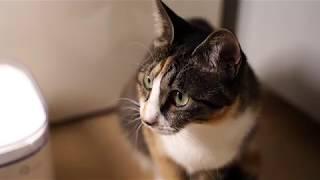 샤오미 고양이 급수기 소음 줄이기 작업 전후