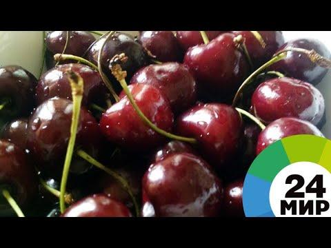 Ягодное изобилие: в Армении начался сбор урожая черешни