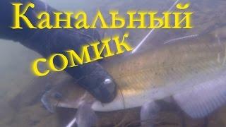 Подводная охота зимой на канального сомика. Подводная охота на сома.