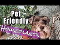Pet Friendly Houseplants || Non-Toxic Houseplants for Pets || Pet Safe Houseplants