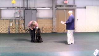 Evans First Akc Obedience Trial Beginners Novice.wmv