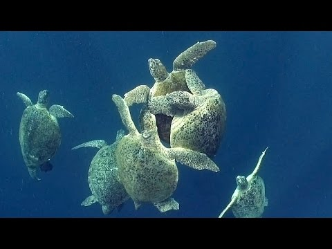Sea Turtles (HD) | JONATHAN BIRD'S BLUE WORLD