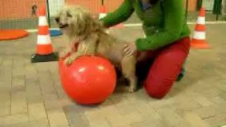 Qua La Zampa fisioterapia veterinaria Moncalieri (TO)
