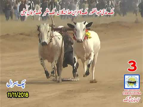 Bul Race In Pakistan Sunny Video Fateh Jang11 11 2018 NO3