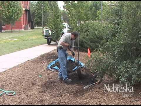 Gardening - Backyard Farmer - Planting Trees & Shrubs
