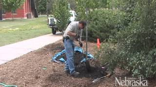 Gardening - Backyard Farmer - Planting Trees & Shrubs
