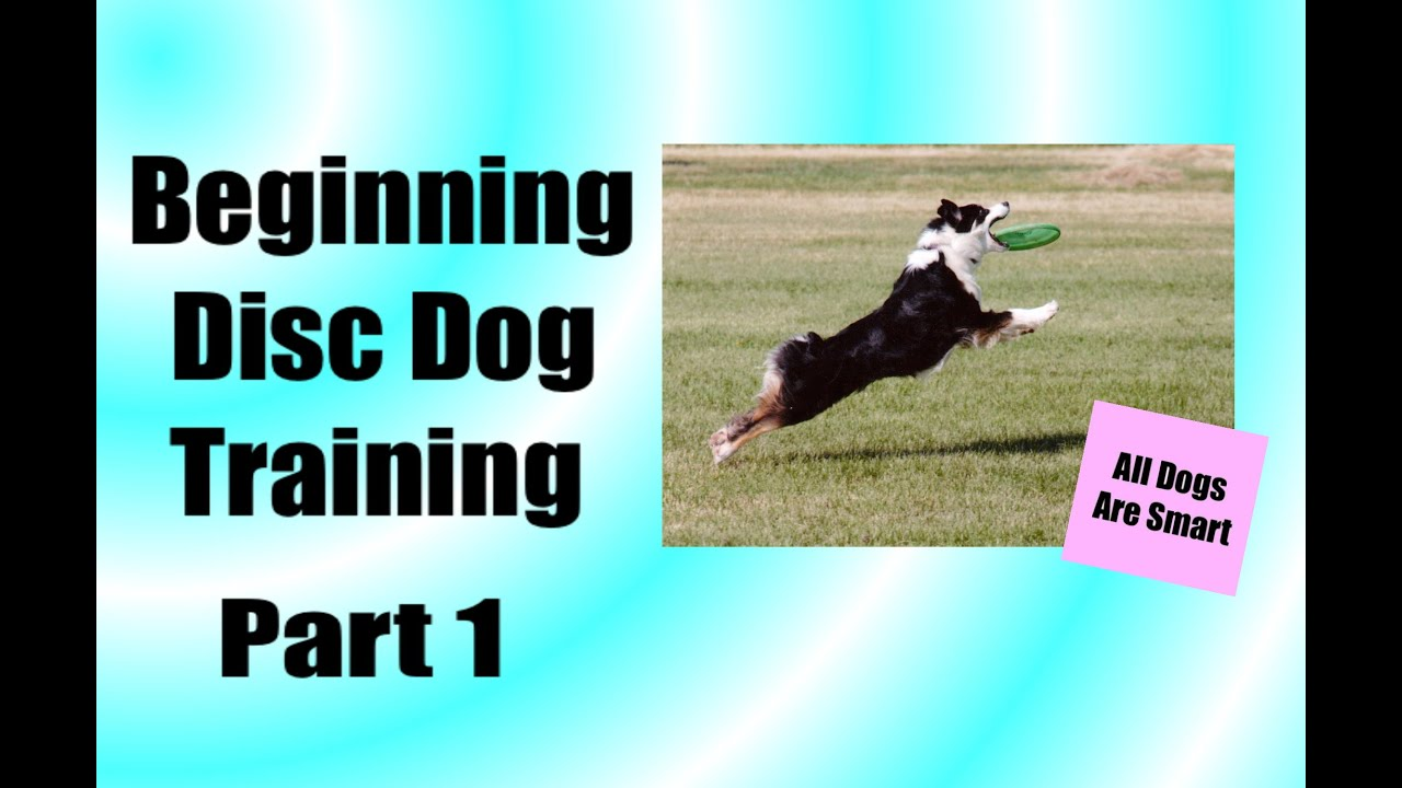 How Teach Your Dog To Play Disc From Scratch Part 1