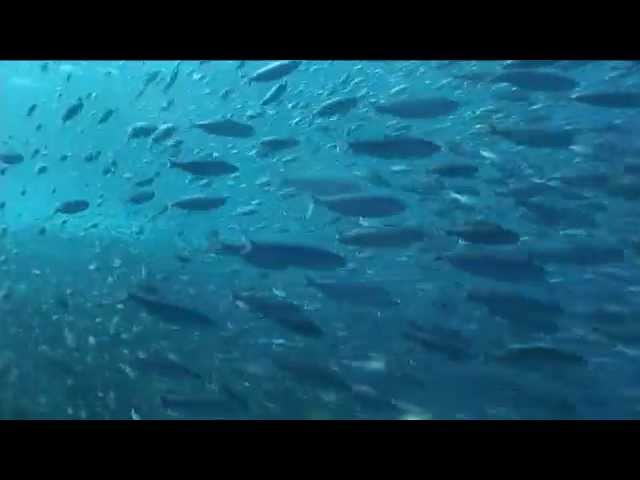 コモドクルーズ Komodo Cruise